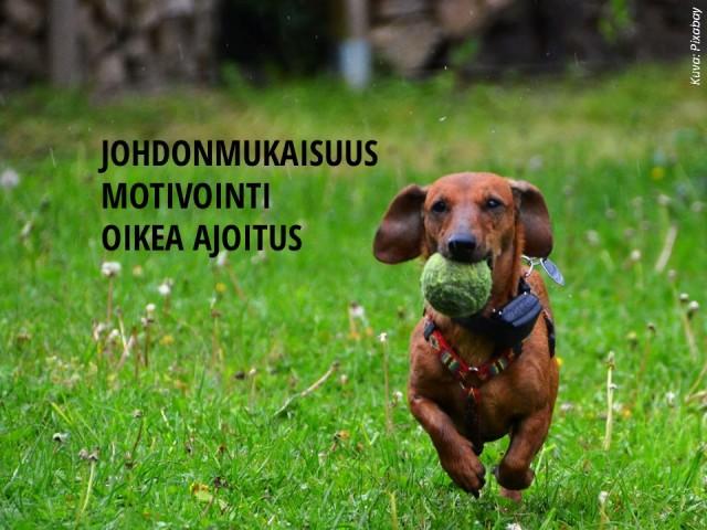 Outi_Lammi_ruudukon_sovellus